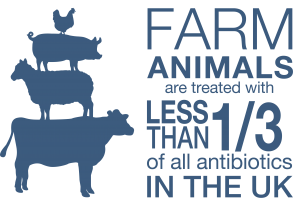 In Antibiotics & UK Farming, food producing animals account for 35% of antibiotic use in the UK