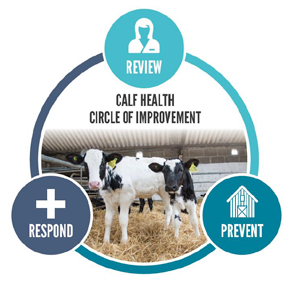 CalfHealth Circle of Improvement